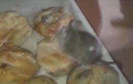 У Чернівцях миша харчувалась солодощами у вітрині кіоску