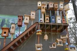 У Міжнародний день птахів юні чернівчани презентували свої творчі роботи