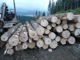 Реалізація деревини на Буковині буде здійснюватись через біржі
