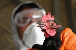 У Чернівцях будуть боротися з пташиним грипом і африканською чумою