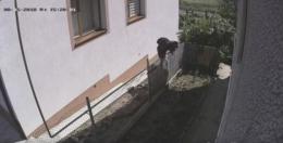 Зловмисник грабує будинок у Садгорі