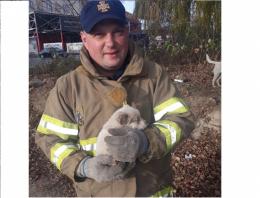 Чернівецькі рятувальники врятували маленьке цуценя