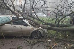 На Полєтаєва у Чернівцях дерево впало на легковик