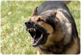 На Буковині від укусів собаки помер чоловік