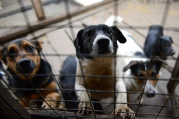 У Чернівцях притулок для тварин шукає ветеринара
