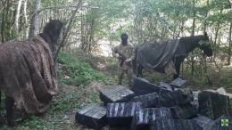 На Буковині біля кордону затримали кінний караван із цигарками на пів мільйона (відео)