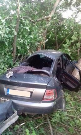 """На Буковині """"Ауді"""" злетів з траси і врізався в дерево, загинула дівчина"""