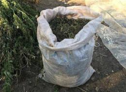 На Буковині затримали чоловіка, який вирощував наркотики на горищі свого будинку (фото)