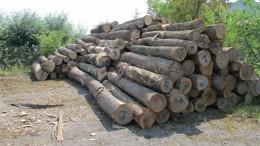 Чернівецькі митники в черговий раз припинили спробу незаконного вивезення деревини до Румунії