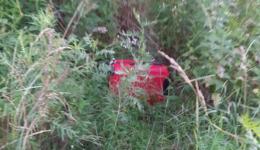 У Чернівцях виявили валізу з трупом дитини