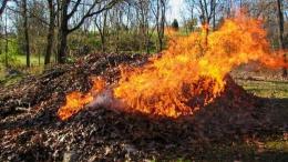 У Чернівцях за спалювання листя, гілля та сміття складено 16 протоколів