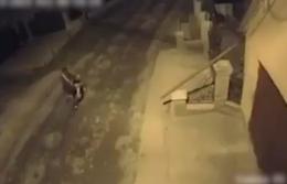 У Чернівцях розшукують чоловіка, який ймовірно потруїв собак (відео)