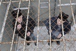 В Сокирянській колонії 700 засуджених постійно працюють