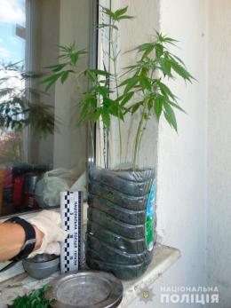 У квартирі чернівчанина поліція вилучила 27 нарковмісних рослин