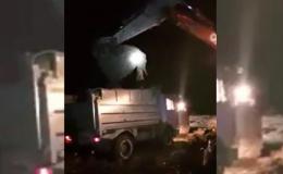 На Буковині селяни виявили нелегальний скотомогильник з понад тисячею тушок свиней (відео)