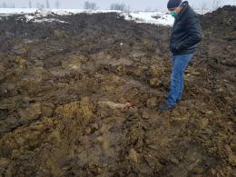 Чернівецька ОДА прокоментувала скандал зі скотомогильником у Луковиці