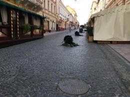 Покарали хлопця, який перевернув вазони на вулиці Кобилянської