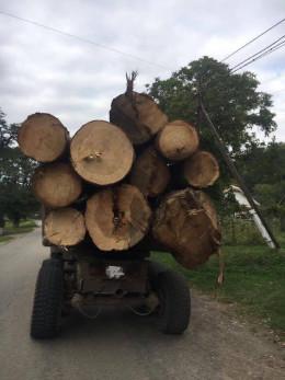 На Буковині СБУ затримала вантажівку з незаконно вирубаною деревиною (фото)