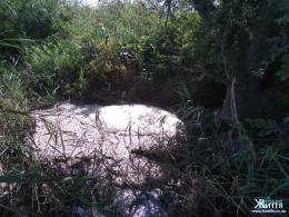 Екологи з`ясували, чим забруднювали річку у Мамаївцях