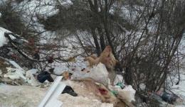 У Новоселицькому районі скасували карантин у зв'язку з вірусом чуми свиней