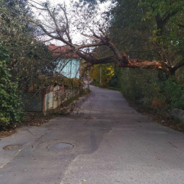 У Чернівцях на Тисменицькій упало дерево