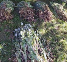 """55-річний буковинець вирощував 2 тисячі рослин снодійного маку """"для власних потреб"""""""
