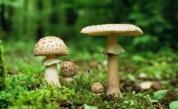 На Буковині 4-річний хлопчик отруївся грибами