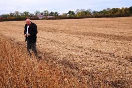 На Буковині невідомі вкрали у підприємця урожай сої на півмільйона гривень