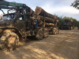На Буковині СБУ затримала лісовози з деревиною без документів (фото)