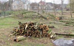 У Чернівцях планують знести велику кількіть зелених насаджень