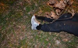 В лісопосадці знайшли труп жінки
