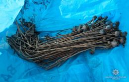 На Буковині виявили дві ділянки з незаконними посівами маку (фото)