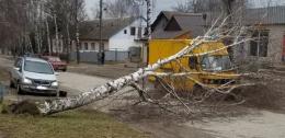 У Сокирянах дерево впало на хлібовоз