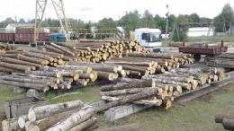 В лісгоспах на Буковині запрацює електронний облік деревини