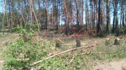 Двох сторожинчан судитимуть за незаконну вирубку лісу