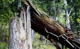 40-річний буковинець важко травмувався через падіння з дерева