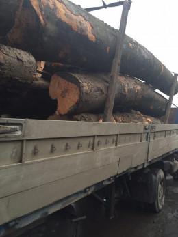 На Буковині затримали вантажівку з лісом без документів