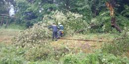 На залізничну колію на Вижниччині впало дерево (фото)
