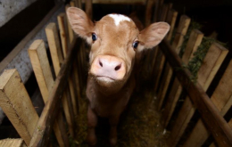 Двоє буковинців вкрали у сусіда худобу та сільськогосподарську техніку