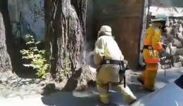 У центрі Чернівців рятувальники знешкодили осине гніздо (відео)