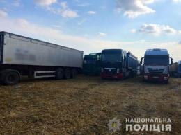 У двох селах на Буковині незаконно збирали урожай пшениці