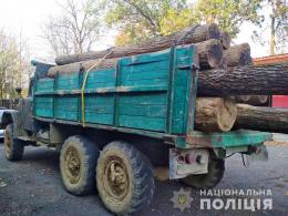 На Буковині поліція задокументувала незаконне перевезення деревини