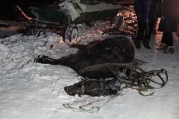 На Буковині Volkswagen на ожеледиці зіткнувся з возом, загинув кінь
