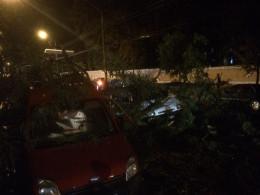 У Чернівцях сильний вітер повалив дерева та білборди (фото)