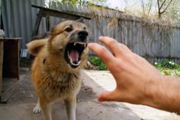 В поліції на Буковині з'ясовують обставини смерті чоловіка внаслідок укусів собаки