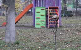 На дитячому майданчику в Сторожинці знайшли череп людини (фото)