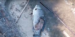 У Чернівцях в озері парку «Жовтневий» масово гинуть карасі