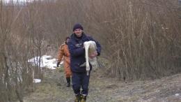 У Чернівцях співробітники ДСНС врятували пораненого лебедя