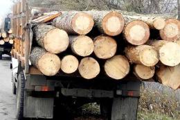 Буковинська фірма вивозила за кордон ділову деревину під виглядом дров