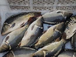 Засуджено двох молодиків, які викрали у підприємця 128 кг риби